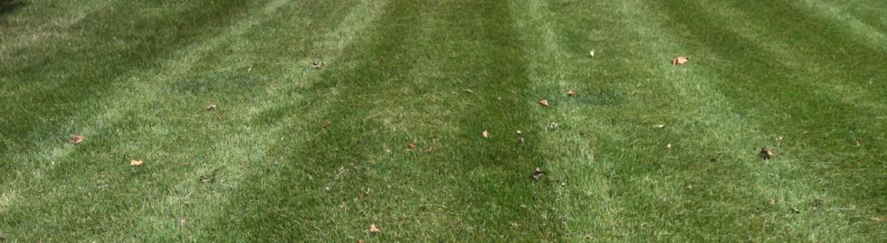 Turf - Turf Type Tall Fescue Mixed Rye and Kentucky Blue Grass